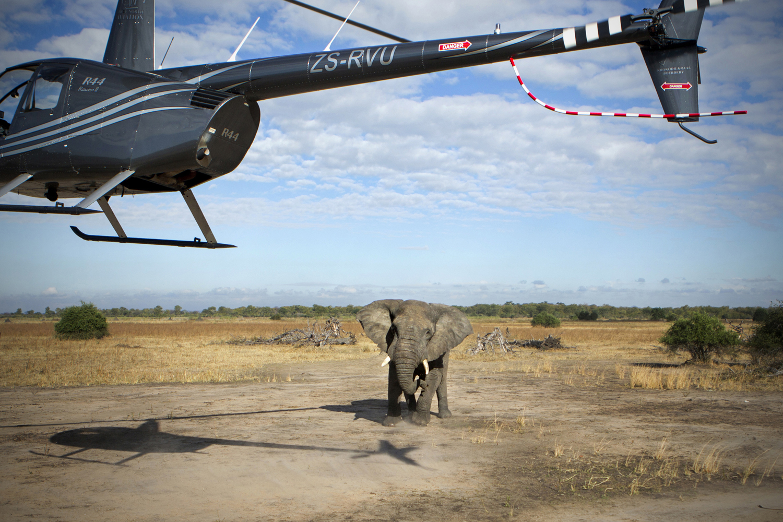 elephanttranslocation_malawi_01