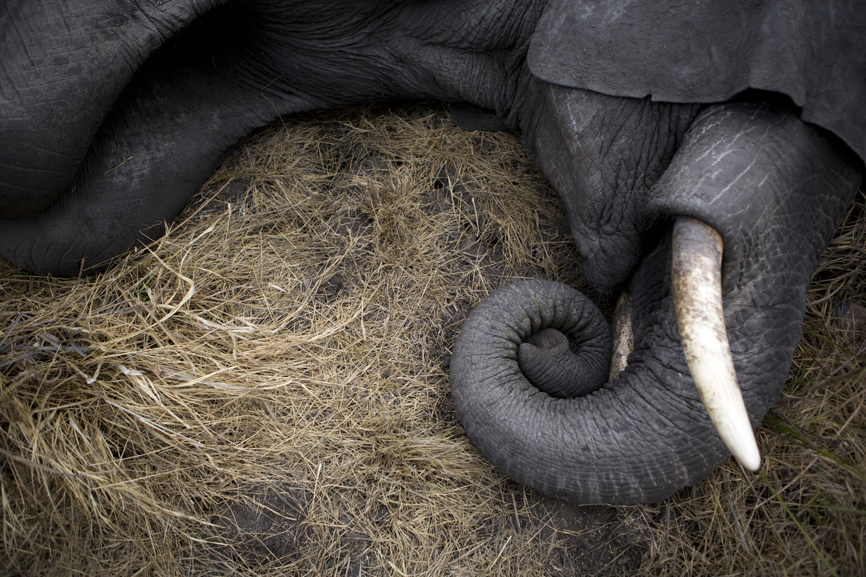elephanttranslocation_malawi_03