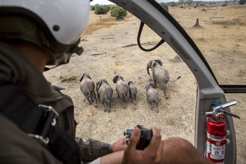 elephanttranslocation_malawi_04