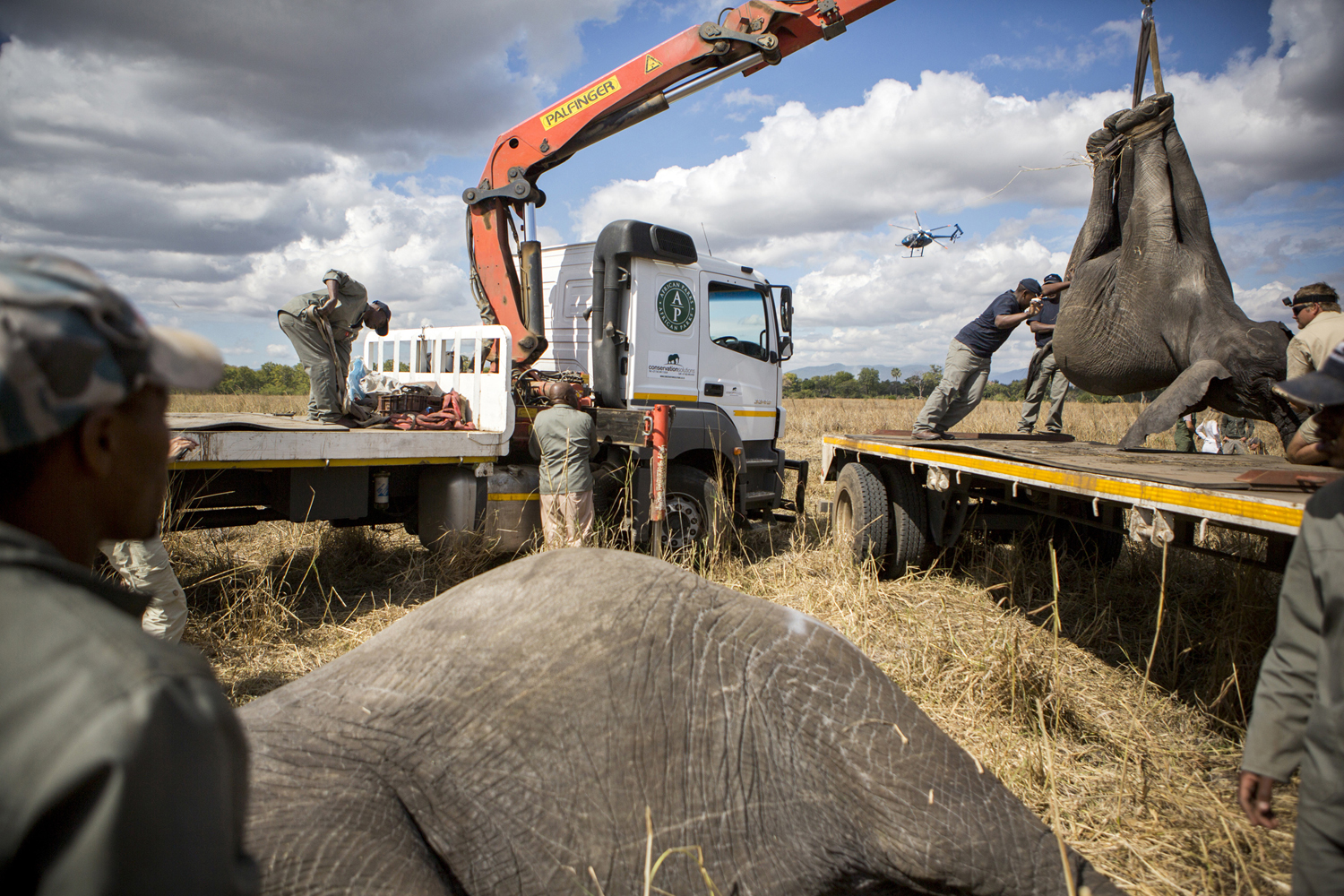 elephanttranslocation_malawi_05