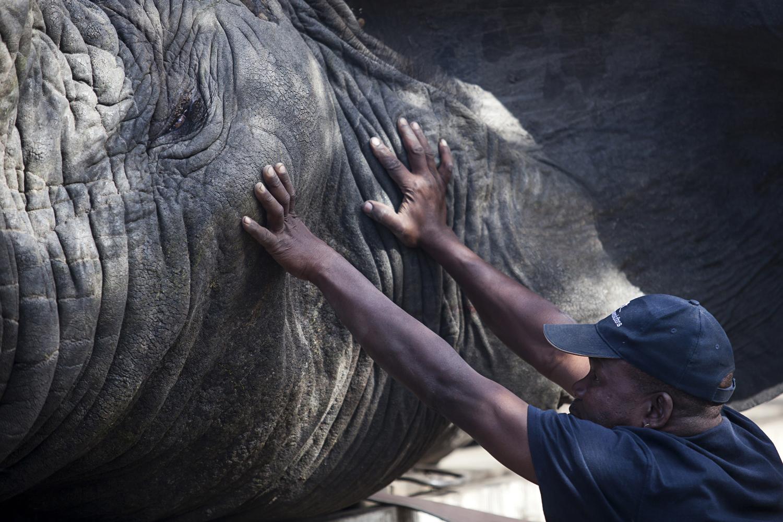 elephanttranslocation_malawi_06