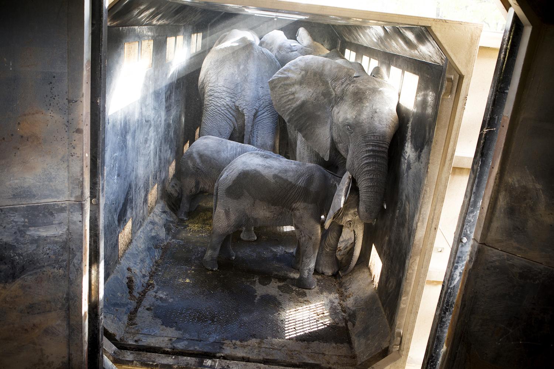 elephanttranslocation_malawi_08