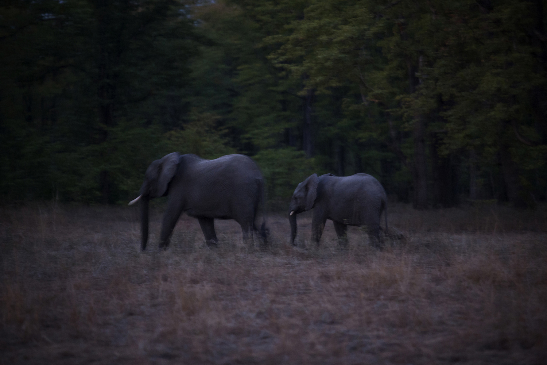 elephanttranslocation_malawi_10